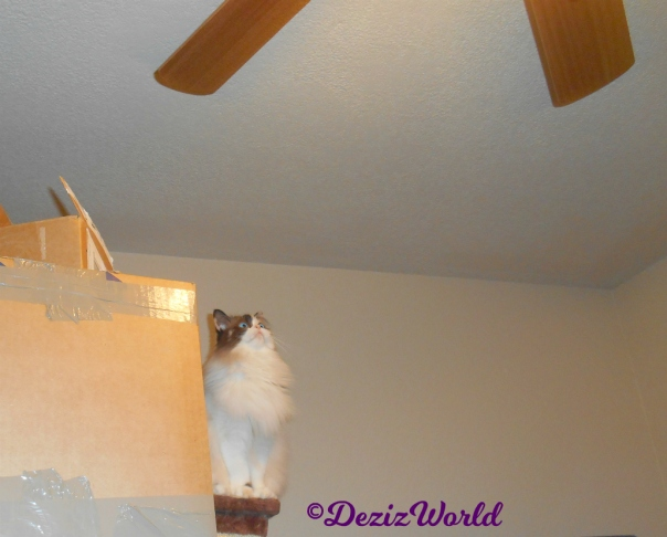 Raena watches the ceiling fan atop boxes