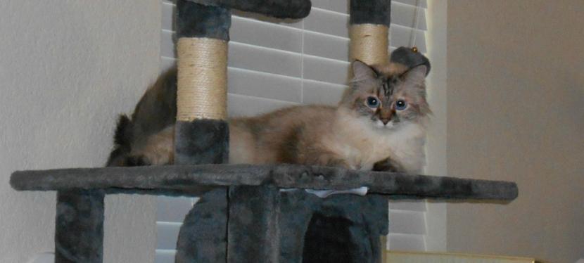 Feline Friday: Hide AndSeek