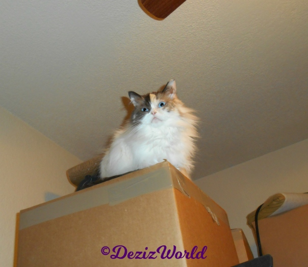 Raena sits atop boxes