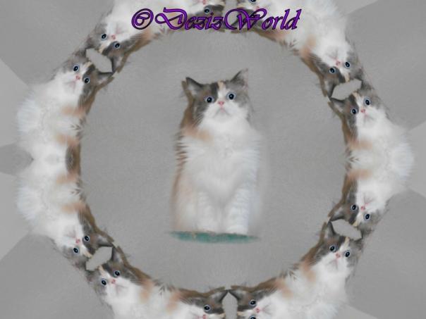 Raena encircled kaleidescope