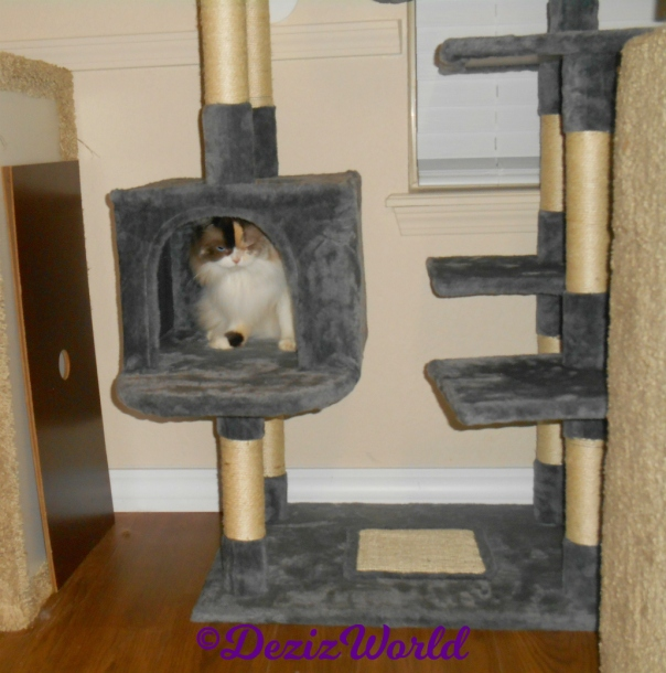 Raena sits in cat tree house