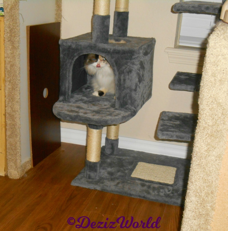 Raena sits in cat tree house tongue out