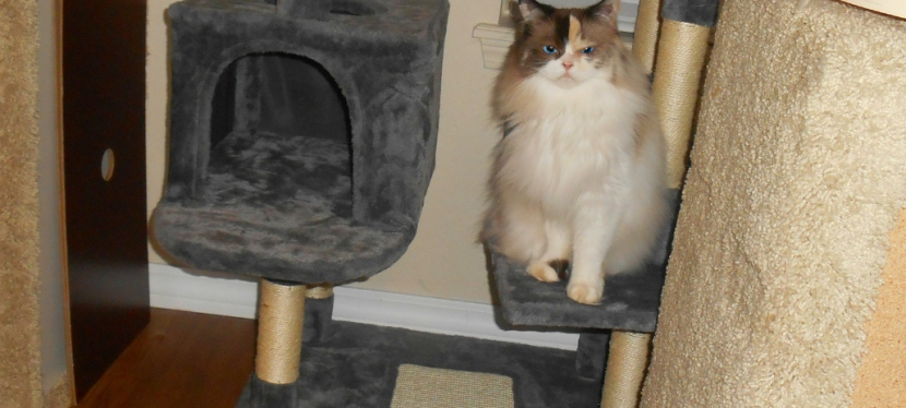 Tell All Tuesday: A Cat Tree For LargerCats