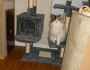 Tell All Tuesday: A Cat Tree For Larger Cats