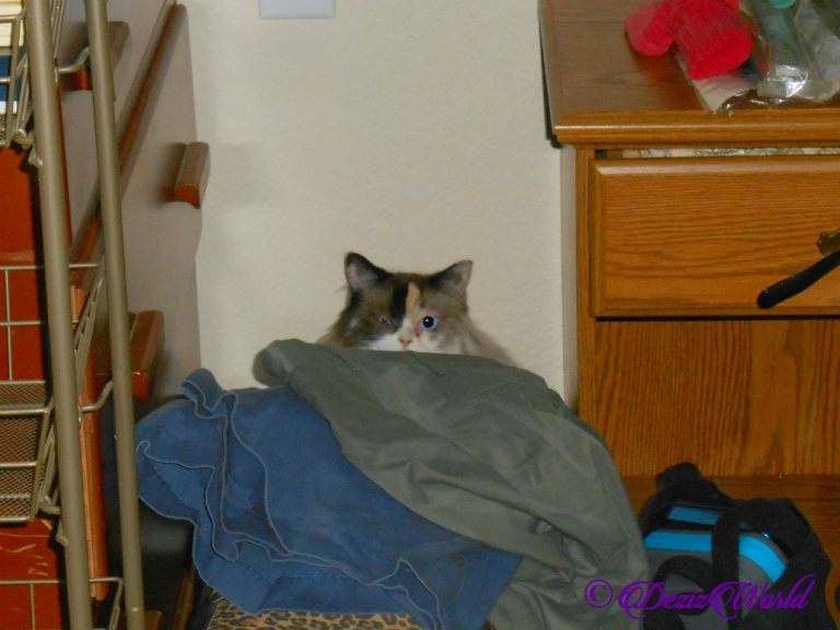 Raena hides behind clothes