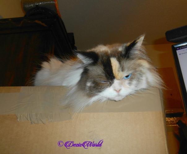 Raena lays on box
