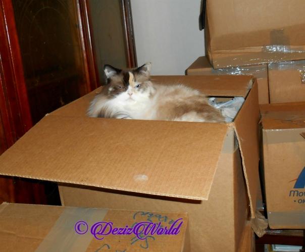 Raena lays inside box