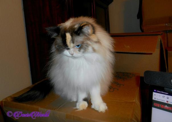 Raena sits atop box
