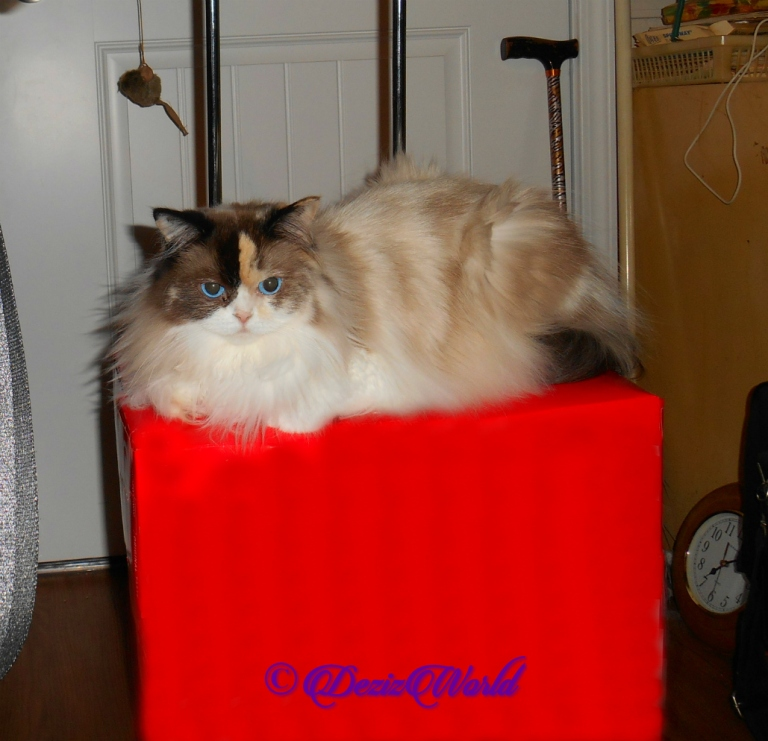 Raena lays atop boxes