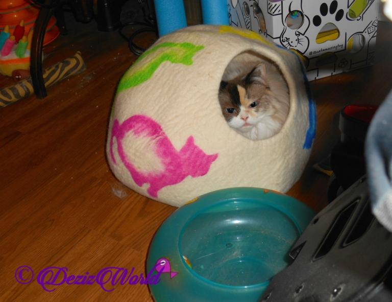 Raena lays in Cat Cave