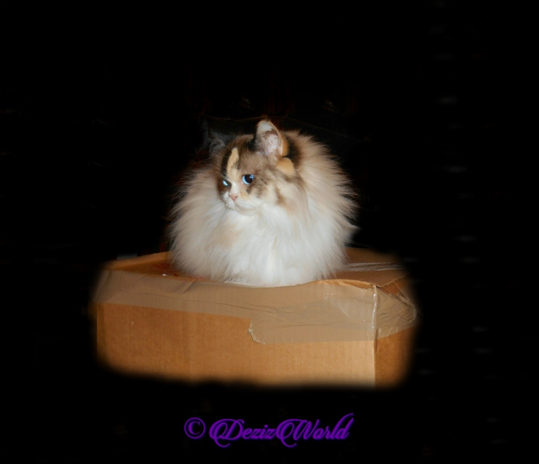 Raena lays pretty on box