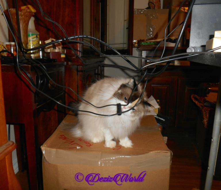 Raena inspects cords