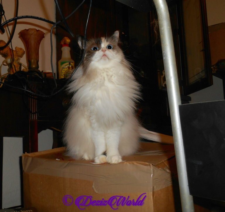 Raena sits pretty atop box