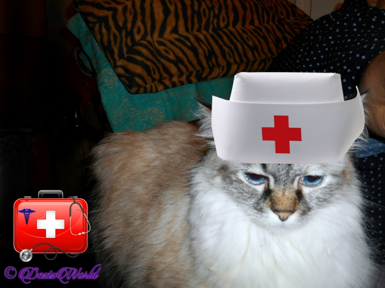 Dezi with nurse cap laying on chair arm