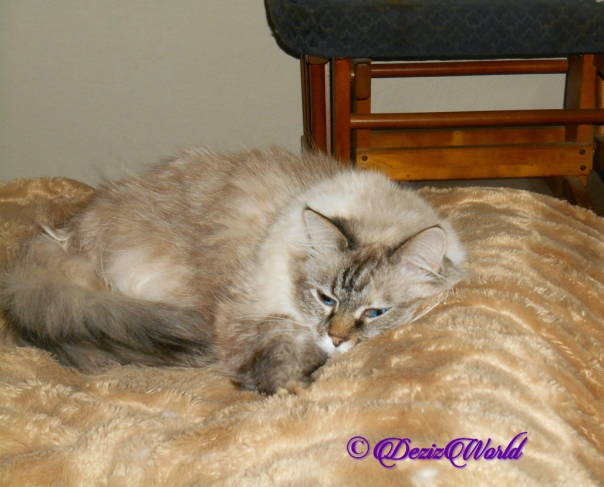 Dezi lays on bed