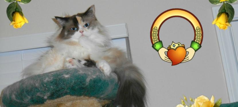 Chatting Cats: Feline Friday: FriendshipSymbols