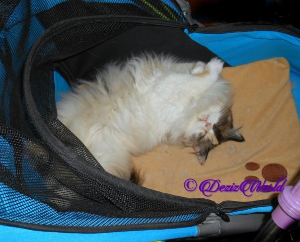 Raena naps in stroller