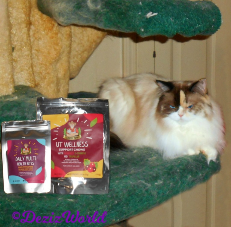 Raena lays on cat tree with scruffy pawsy welness treats