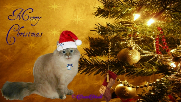Dezi in christms frame with santa hat
