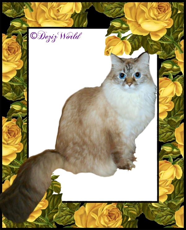 Dezi sits in yellow rose frame