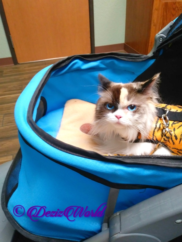 Raena lays in stroller at vet