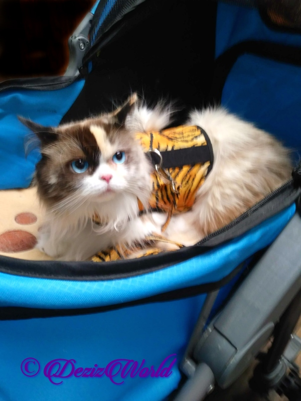 Raena lays in stroller