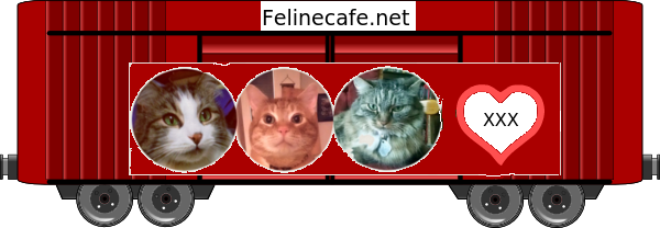 Feline Cafe 2019 Blessing Train
