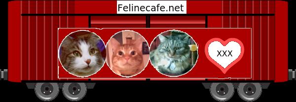 Feline Cafe 2019 Blessing Train