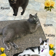 Raven, Storm and Talley