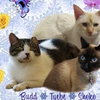 Shoko, Tyebe and Budd