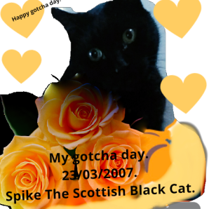 Spike the Scottish black cat