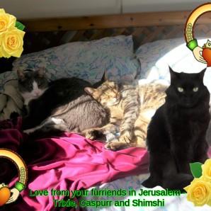 Trixie, Caspurr, Shimshi