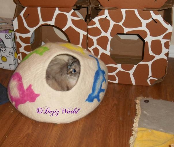 Dezi lays in the cat cave