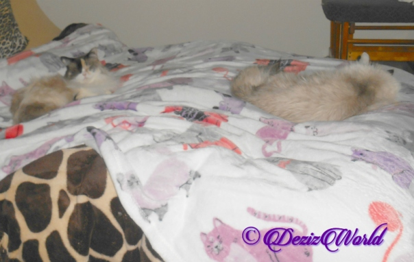 Dezi and Raena sleep on bed