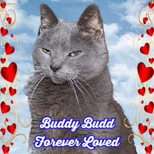 Buddy Budd Forever Badge