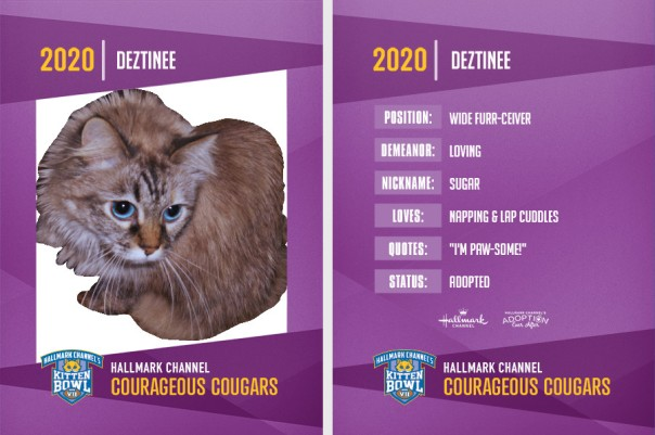 Dezi, 2020 kitten bowl trading card