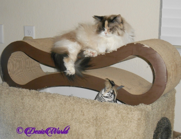 Raena lays on cat scratcher