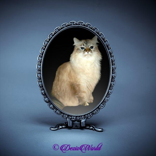 Dezi in blue mirror frame