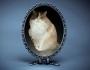 Chatting Cats: Rambling FelineFridays
