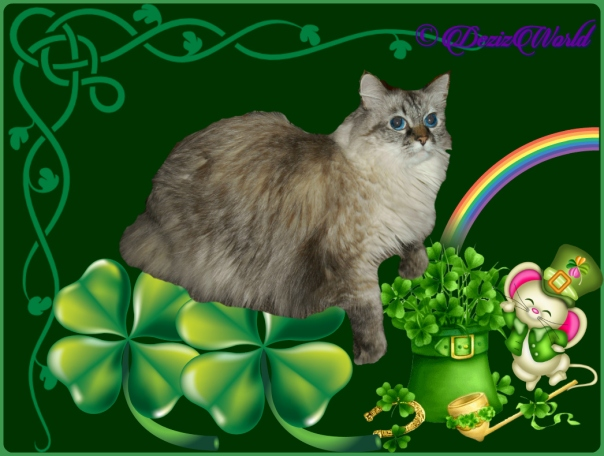 Dezi in St. Pat's Day frame