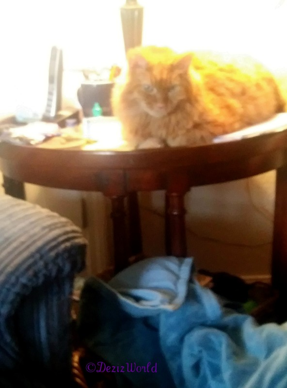 Jubal laying on table