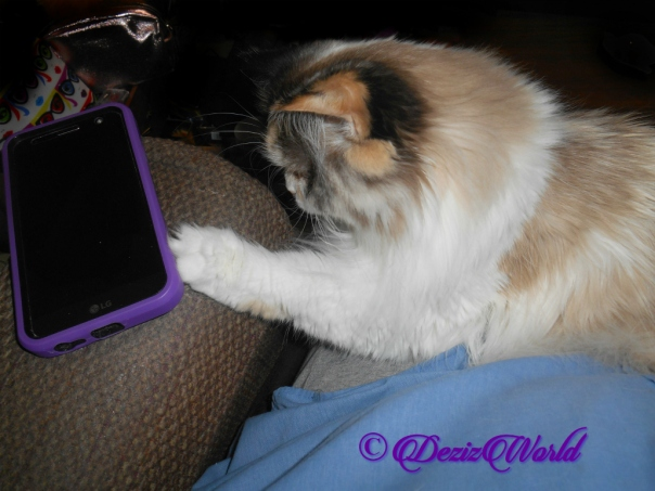 Raena taps at phone while laying in lap