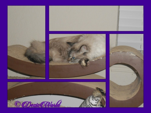 Dezi on scratcher in framed pieces