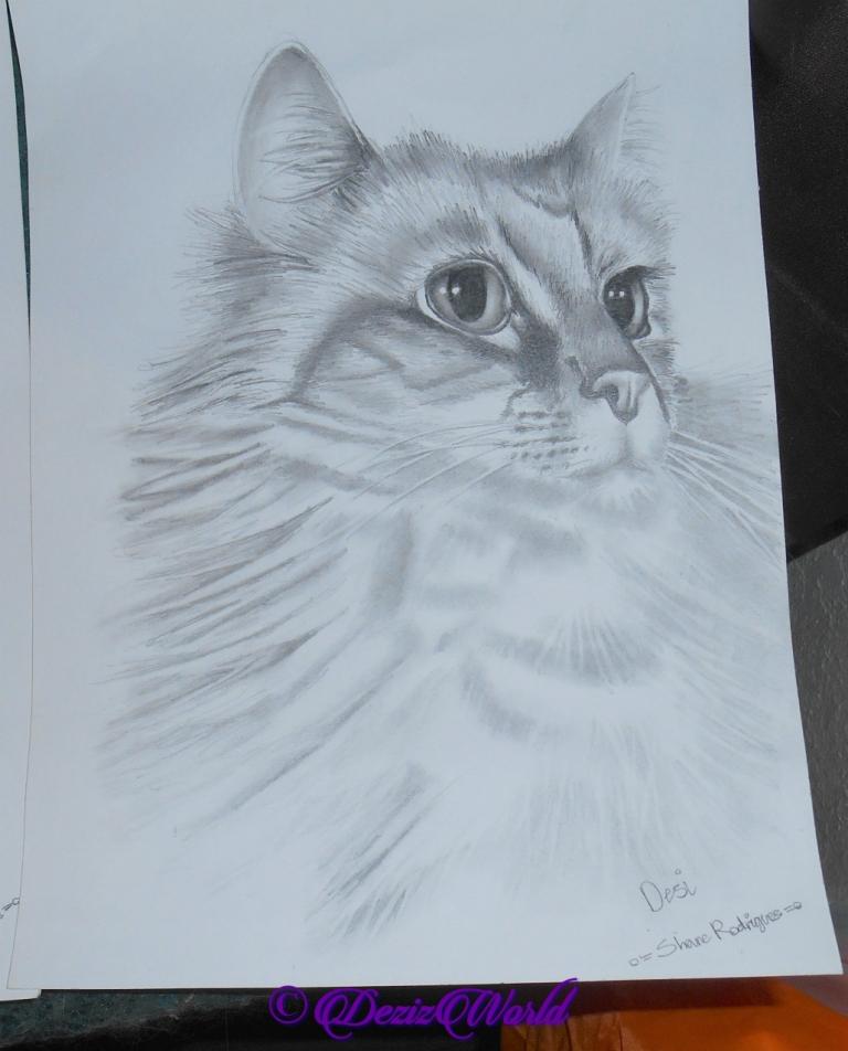 Pencil drawing of Dezi