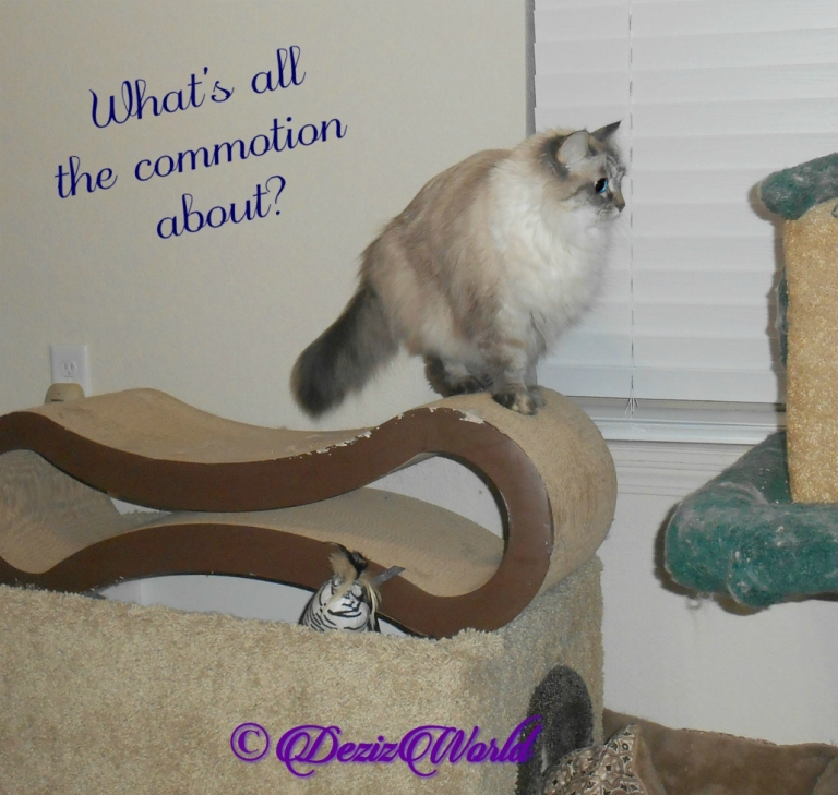 Dezi asks what's the commotion