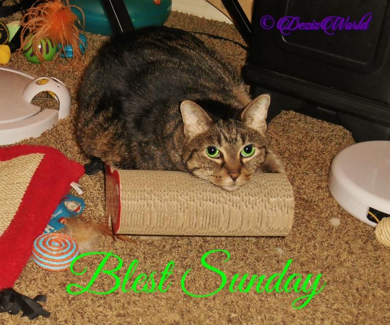 Lexi lays on scratcher Blest Sunday