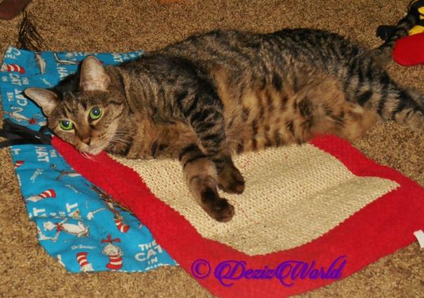 Lexi lays on nip mat