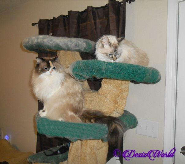 Raena and dezi sitting atop the Liberty Cat Tree,