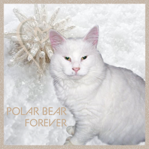 Polar Bear forever