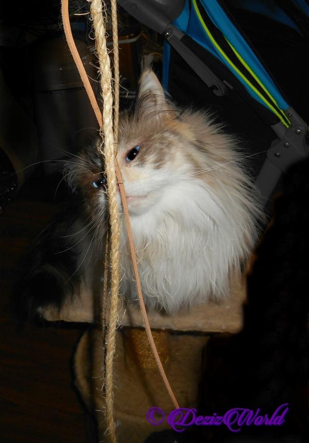 Raena sniffs kittywhips